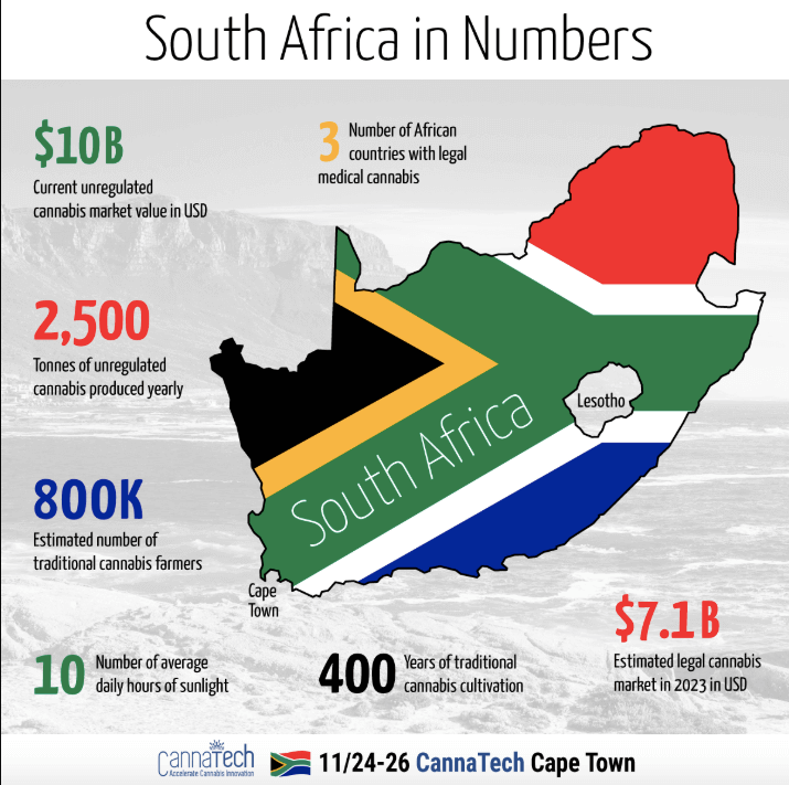 South African cannabis in numbers